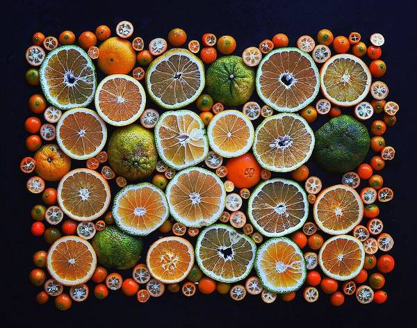 Winter Citrus Mosaic Poster