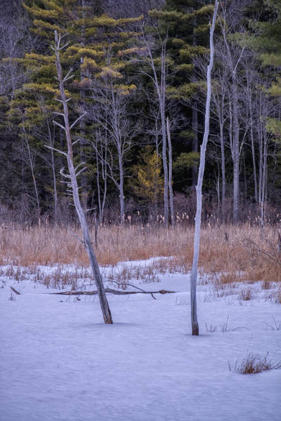 Winter Marsh And Trees Poster