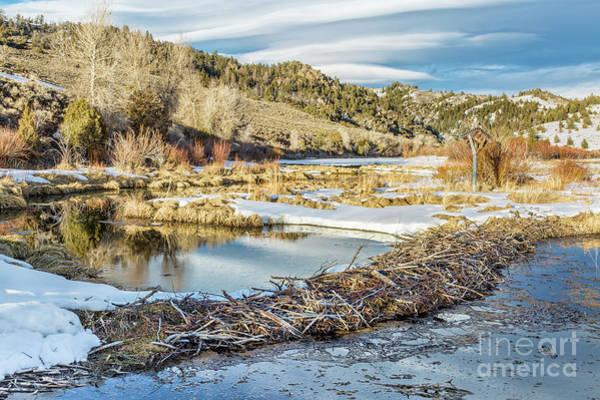 Winter On Beaver Swamp Poster