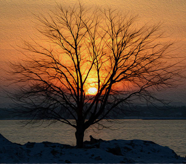 Winter Tree Sunrise Poster