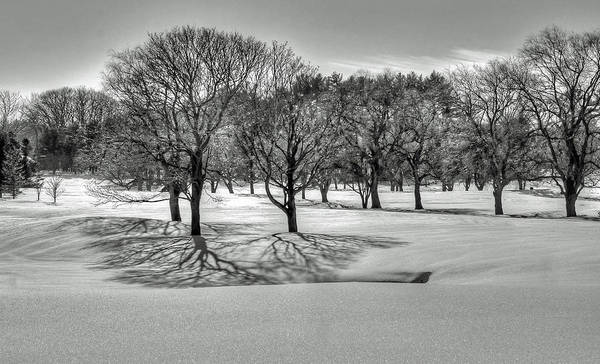 Poster featuring the photograph Winter Trees by Wayne Marshall Chase