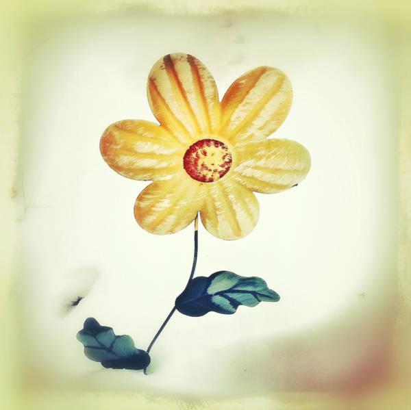 Winters Bloom Poster