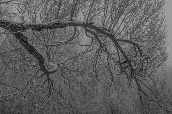 Wintery Tree Poster