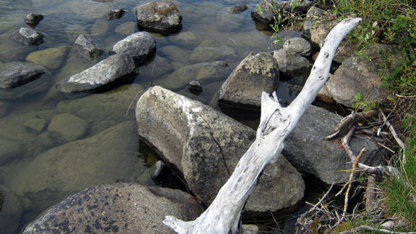 Wood And Rocks In Water Poster