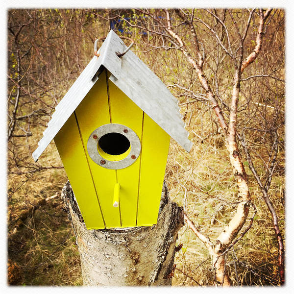 Yellow Bird House Poster