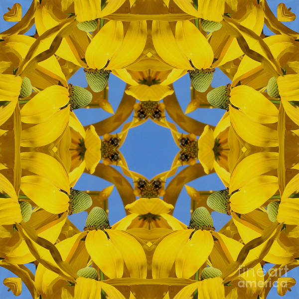 Yellow Coneflower Kaleidoscope Poster