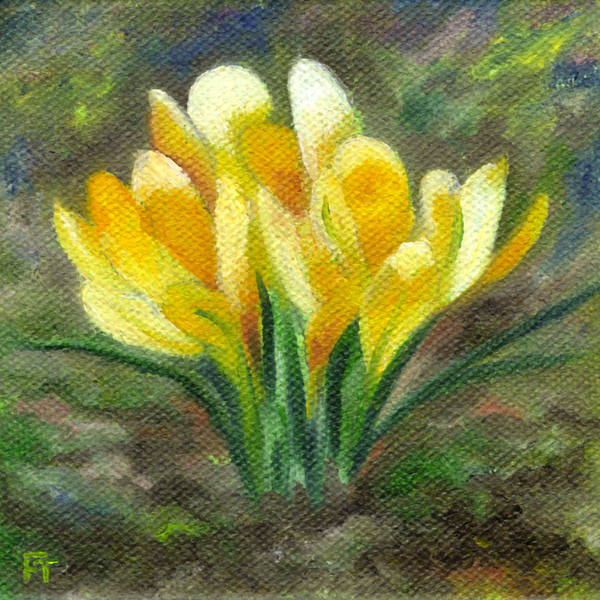 Yellow Crocus Poster