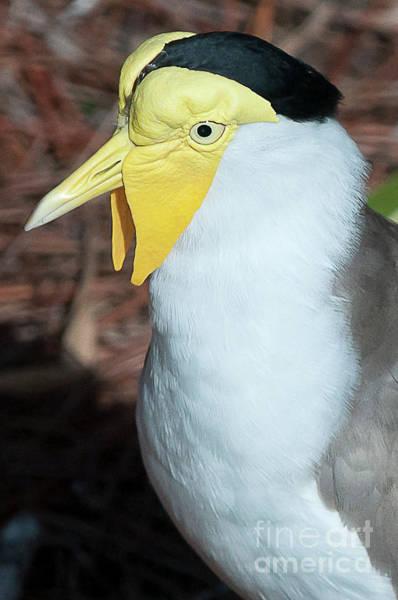 Yellow Headed Bird Poster
