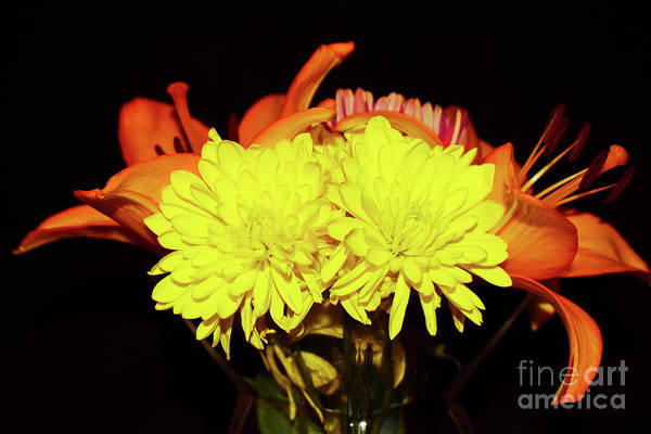 Yellow Mums And Orange Lilies  Poster