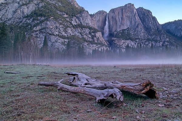Yosemite Falls Driftwood Poster