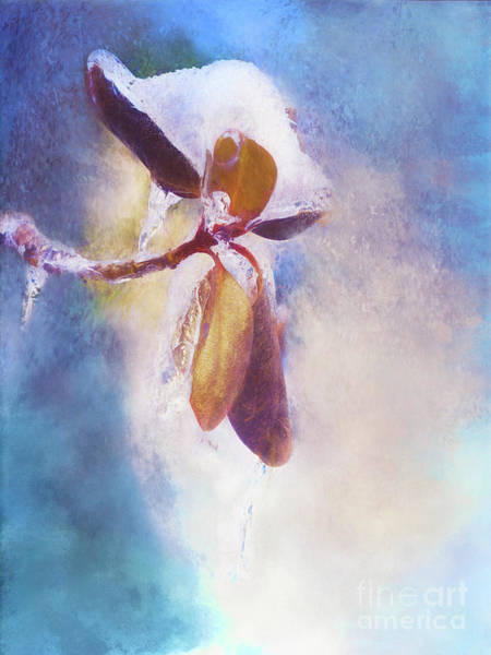 Winter Abstract - Snow And Ice On Rhododendron Leaves Poster