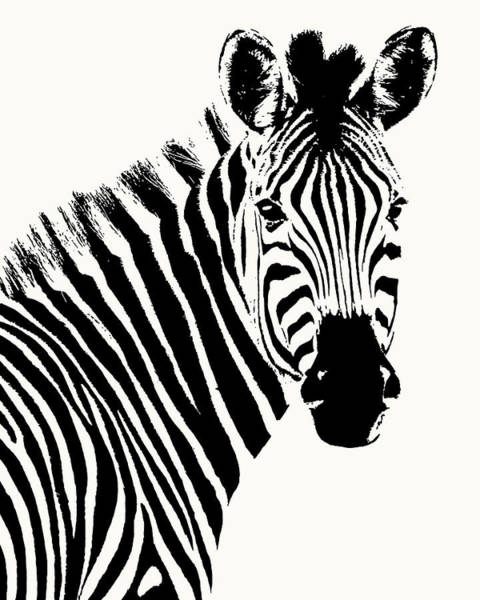 Zebra In Graphic Black And White Poster