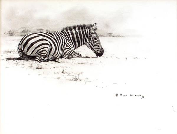 Poster featuring the painting Zebra Sketch by Alan M Hunt