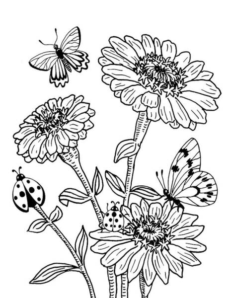 Zinnia And Butterflies Drawing Poster