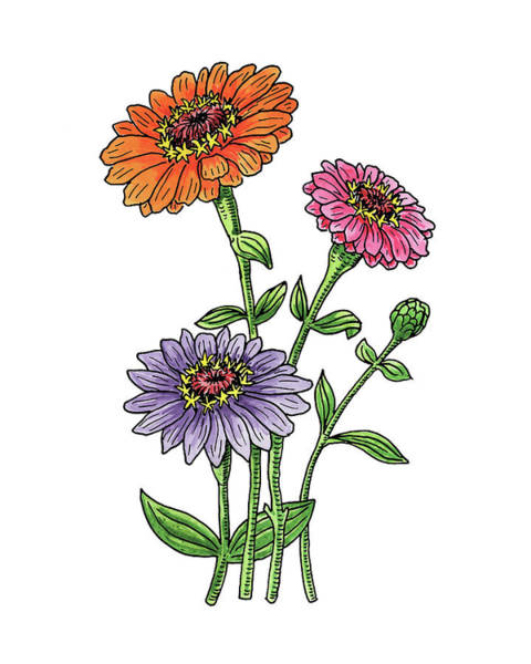 Zinnia Flowers Watercolor Poster
