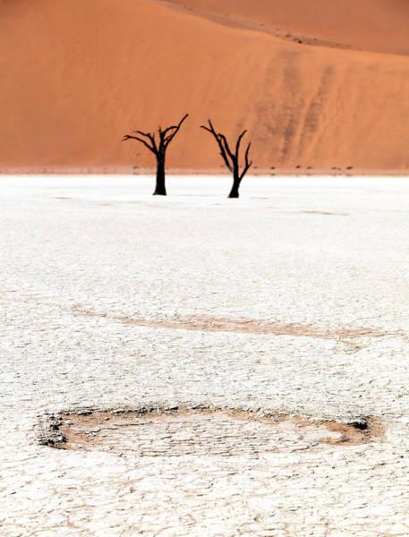 Dead Black Trees In The Desert Poster