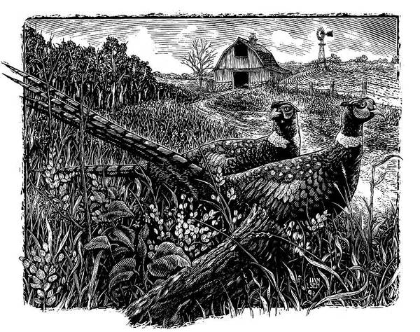 Poster featuring the drawing Pheasants by Clint Hansen