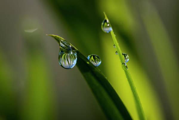 Rain Drops On Grass Poster