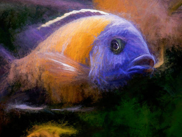 Red Fin Borleyi Cichlid Poster