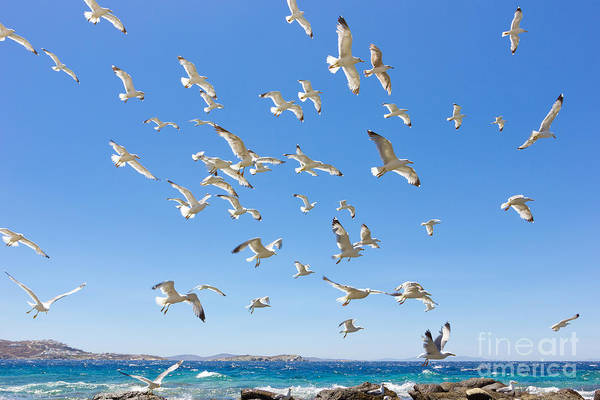Swarm Of Sea Gulls Flying Close To The Poster