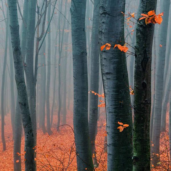 Orange Wood Poster