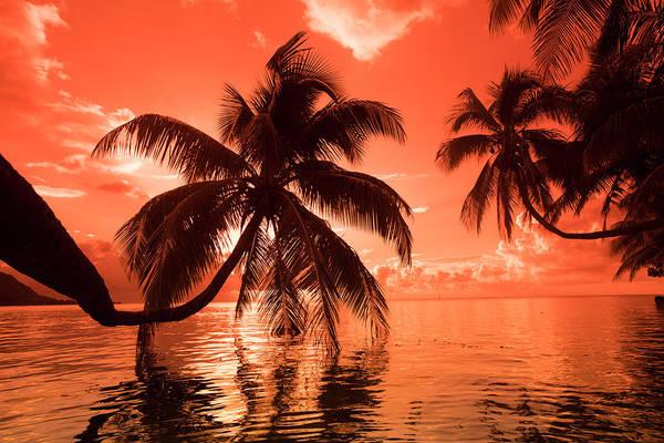 Palm Trees At Sunset, Moorea, Tahiti Poster