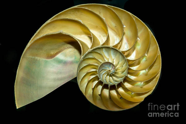 A Cutaway Nautilus Shell Demonstrates Poster