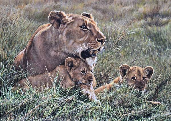 Poster featuring the painting A Quiet Moment Lioness And Lion Cubs by Alan M Hunt