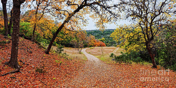 A Walk Through The Maple Forest At Lost Maples State Natural Area - Vanderpool Texas Hill Country Poster