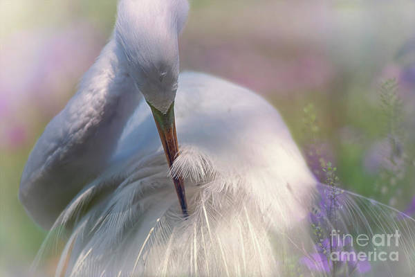 A Zen Moment Fine Art Photography By Mary Lou Chmura Poster