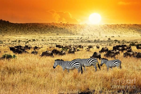 African Landscape. Zebras Herd And Poster