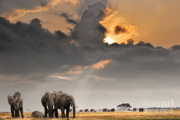 African Sunset With Elephants Poster