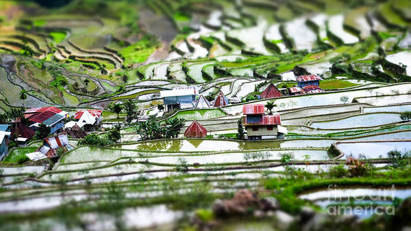Amazing Tilt Shift Effect View Of Rice Poster