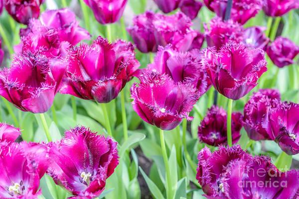Amsterdam Flowers Poster