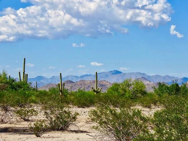 Arizona Desert Hidden Valley Poster