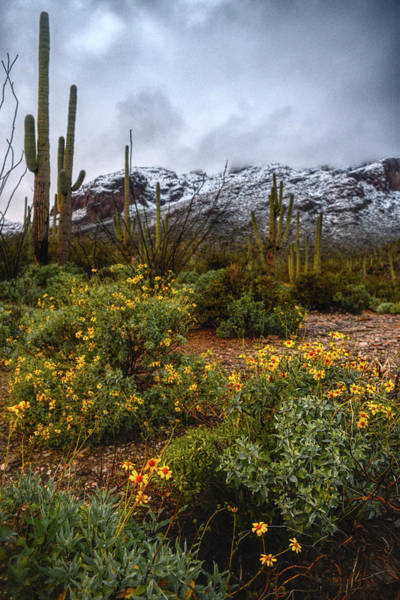 Poster featuring the photograph Arizona Flowers And Snow by Chance Kafka