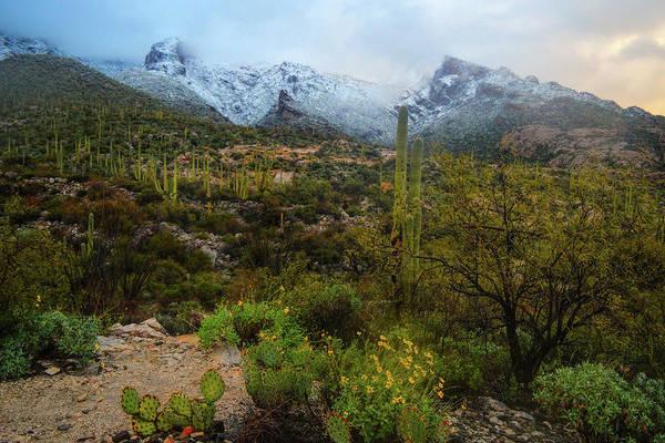 Poster featuring the photograph Arizona Winter Light by Chance Kafka