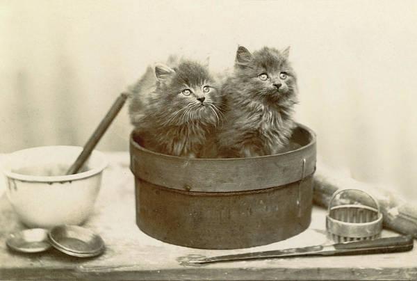 Artistic Kittens Poster