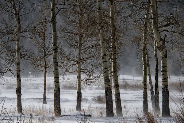 Poster featuring the photograph Aspen Chill by Darlene Bushue