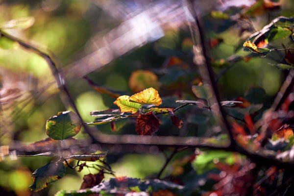 Poster featuring the photograph Autumn Beginnings by Whitney Goodey
