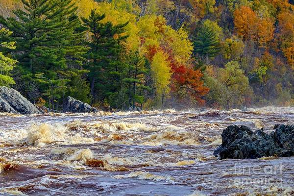 Autumn Colors And Rushing Rapids   Poster