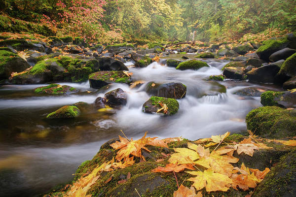 Poster featuring the photograph Autumn Creek by Nicole Young