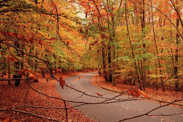Autumn In Holmdel Park Poster