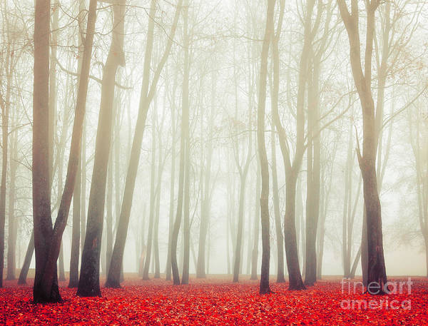Autumn Landscape With Tall Bare Trees Poster