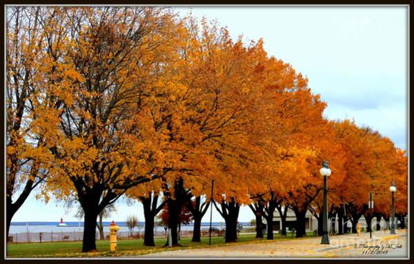 Autumn Leaves In Menominee Michigan Poster