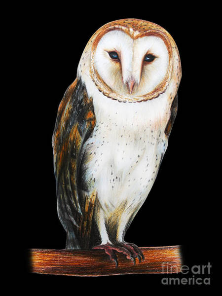 Barn Owl Drawing On Black Background Poster