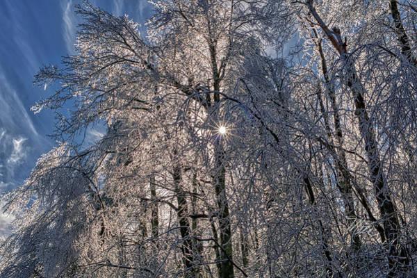 Bass Lake Trees Frozen Poster