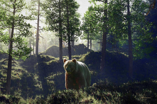 Bear In Forrest Poster