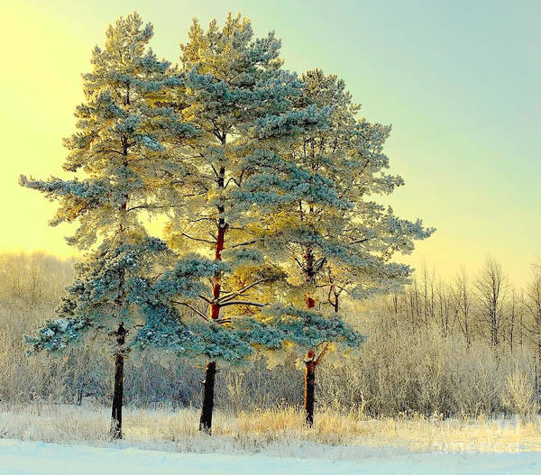 Beautiful Landscape With Winter Forest Poster