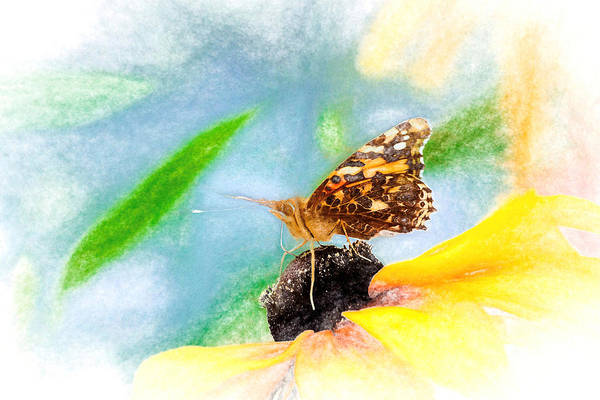 Beautiful Painted Lady Butterfly Poster